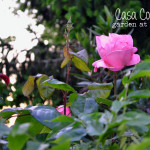 casacountry_garden_sunset_8